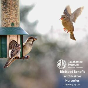 The Tallahassee Museum has partnered with @nativenurseries for a Birdseed Benefit! With each birdseed purchase from January 15 through January 21st, the Museum will get a portion of the sale.  There will also be a special animal encounter on Saturday, January 16 at Native Nurseries!  #tallahassemuseum #livinghistory #NativeNurseries #lovefl #ihearttally #lovefl #birdwatching #floridabirders #floridanurseries